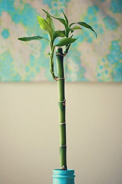 Lucky log bamboo is symbolic of a strong life that's filled with prosperity. This plant is a favorite for businesses to give as gifts, especially to other companies since it promises to keep the business growing.