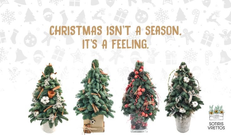 Christmas Nobilis