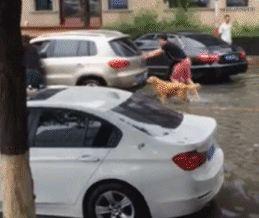 Kutya toló autó ...