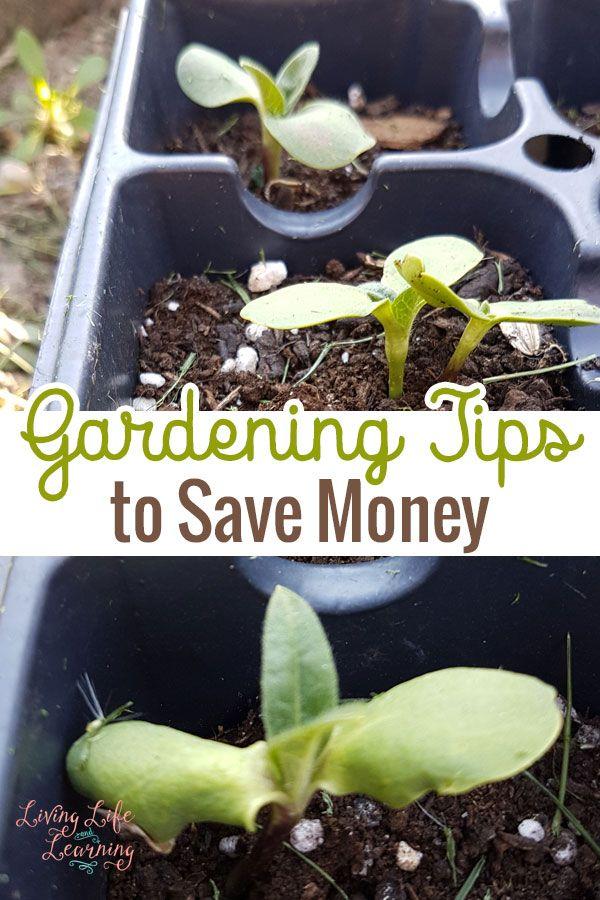 Gardening Tips To Save Money Gardens Organic Gardening And Family Garden