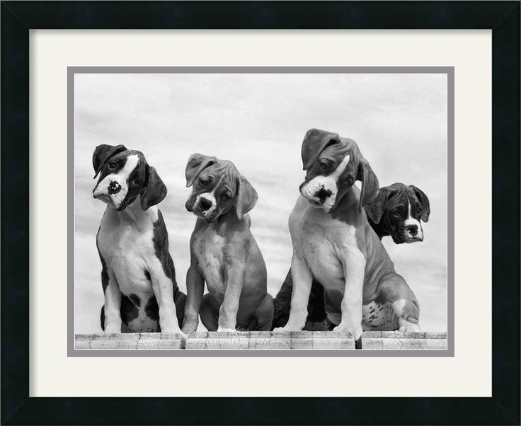 'Wonder' by Sharon Beals Framed Photographic Print