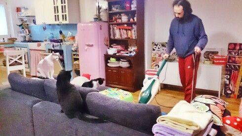 L'uomo, l'aspirapolvere e 3 gatti