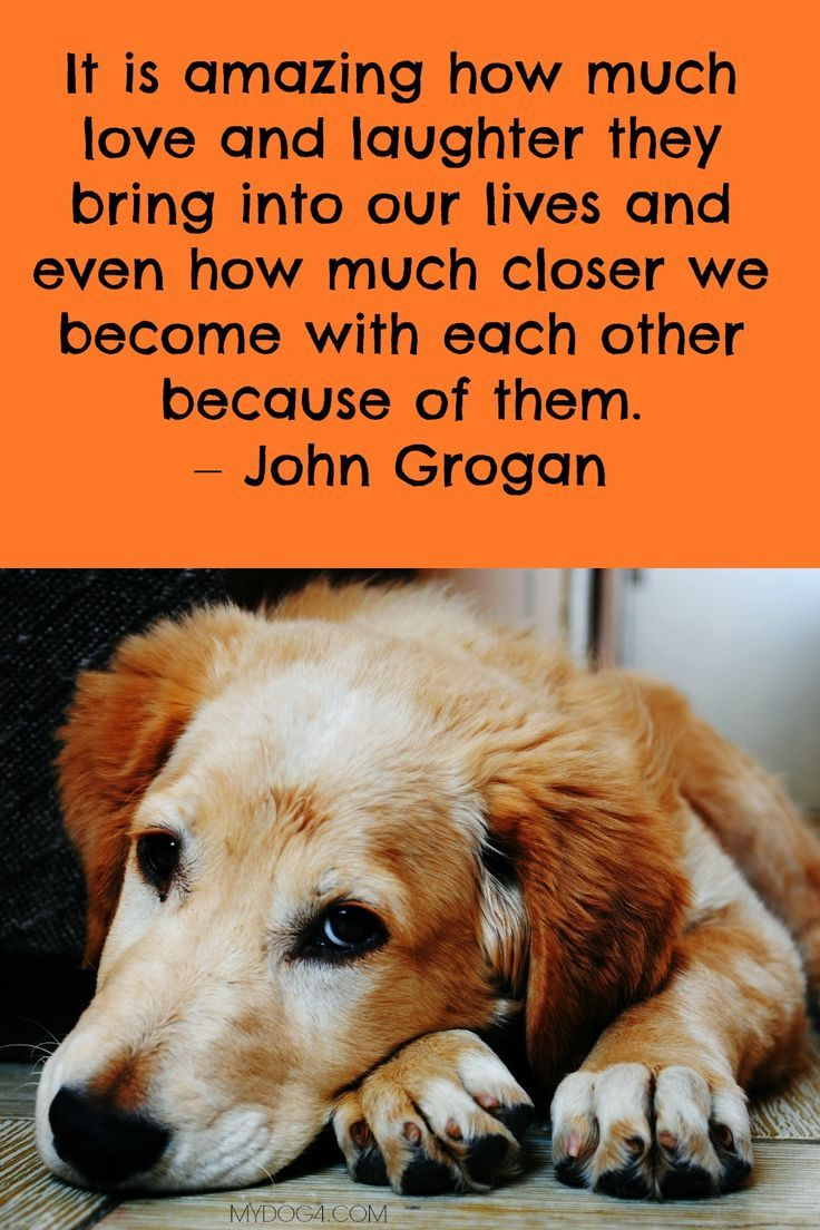 Dog Quote Dog Love Dog Quotes Dog Adoption Quotes