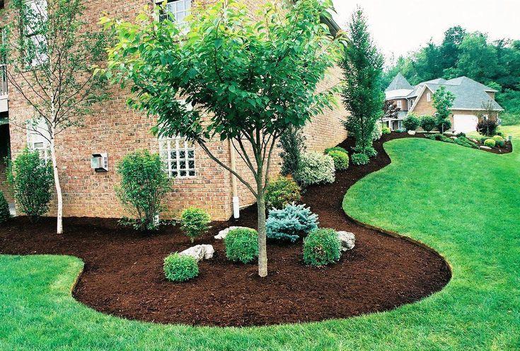 Small Shrubs for Landscaping