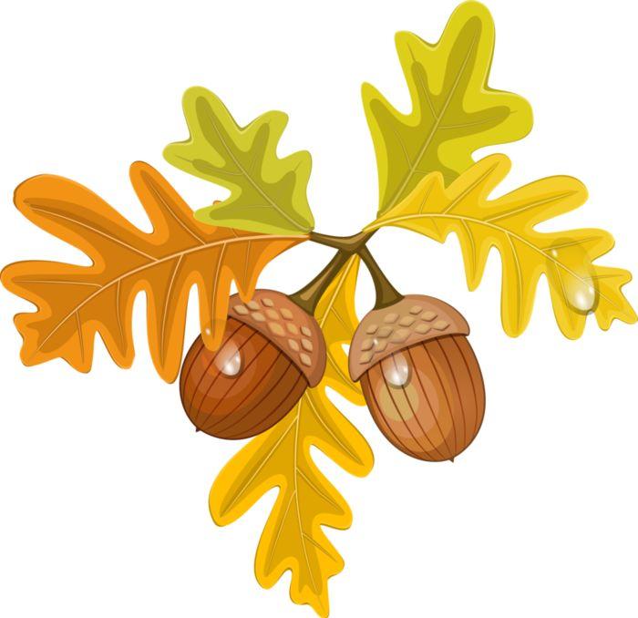 Картинки дубовый лист с желудями