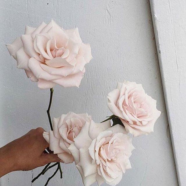• BLOOMS • It's all in the details • RG @whiteinkdesignco • #flowers #blooms #weddingflowers #weddingstyling #weddinginspiration #bouquet #bride #wedding #weddings #weddingblog  #Regram via @onedaybridal
