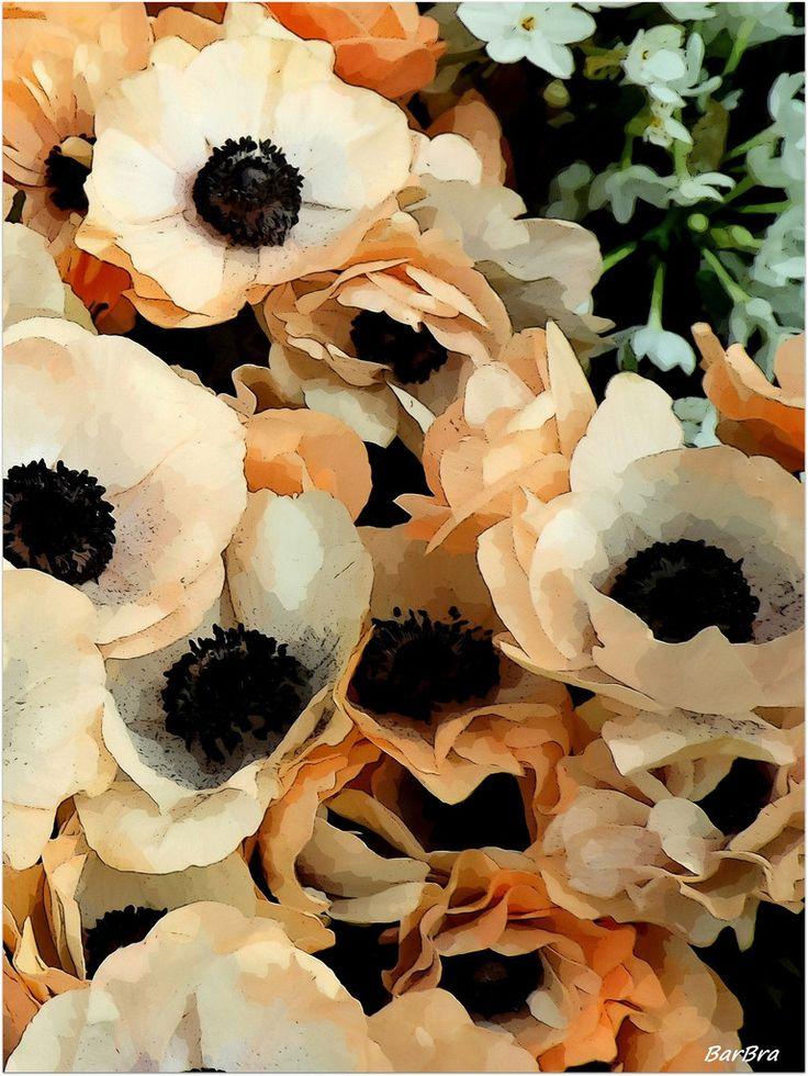 Anemoni ... una primizia per soddisfare la voglia di Primavera  http://ilmioblogdiprova.over-blog.it/2015/01/anemoni.html