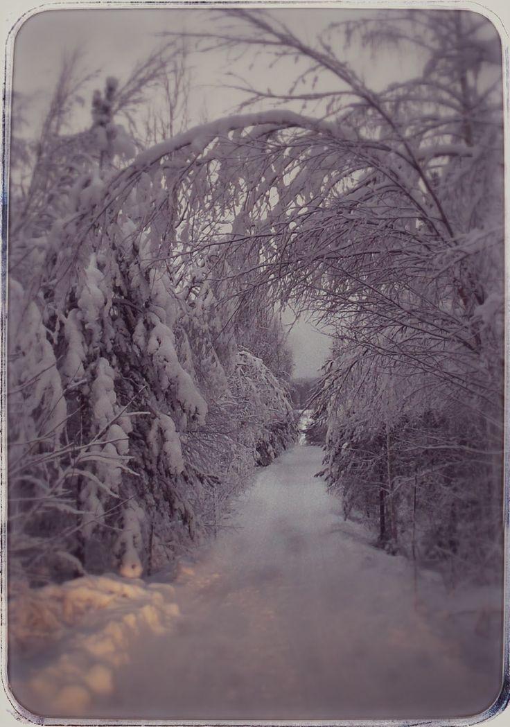 winter scene - my home way at 21 st of December 2014 - Hiltulanlahti Finland