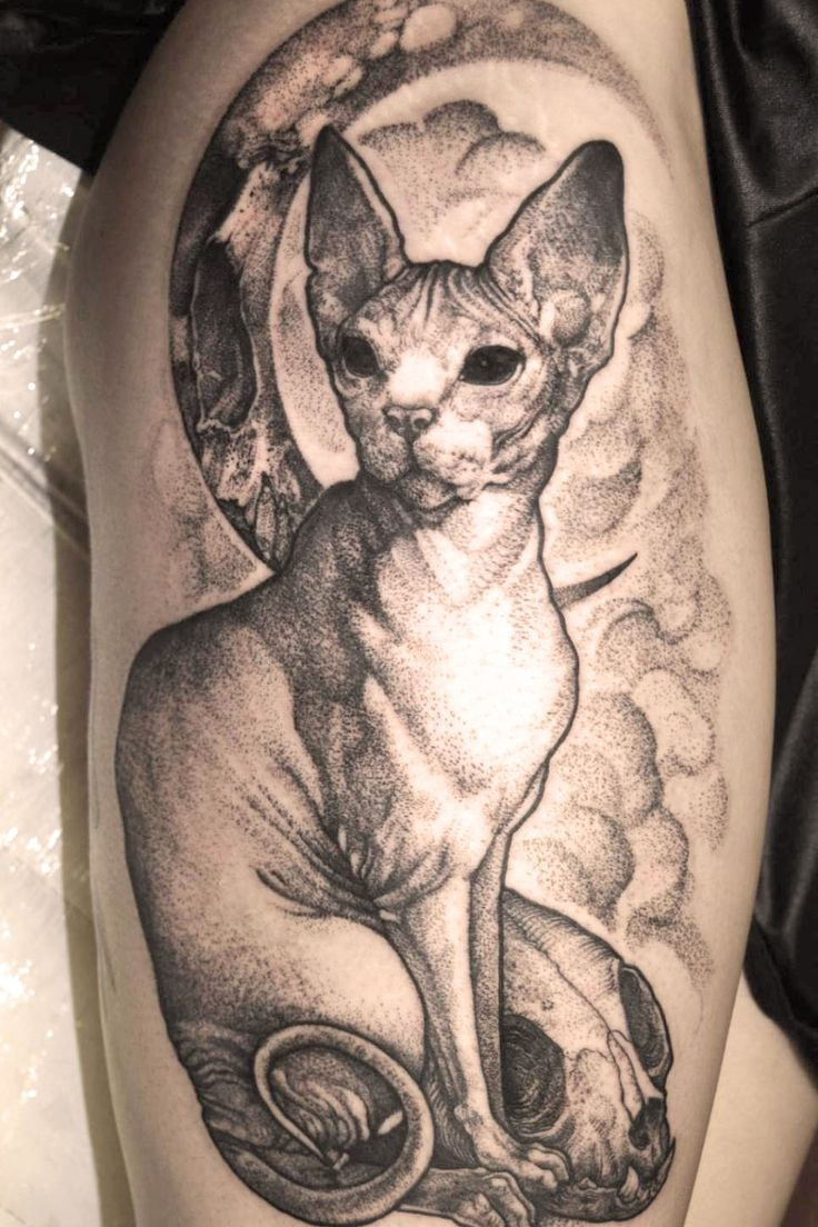 Awesome Cat Sphynx Tattoo Design With Images Sphynx Cat Tattoo Cat Tattoo Cat Tattoo Designs