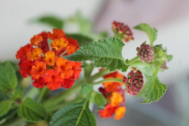 Pin On How To Grow Plants