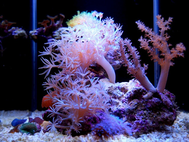 2 6 gallons pico reef nano reef aquariums pinterest for Aquarium recifal complet