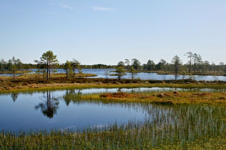 Swamp of Kauhaneva-Pohjankangas National park  Finland