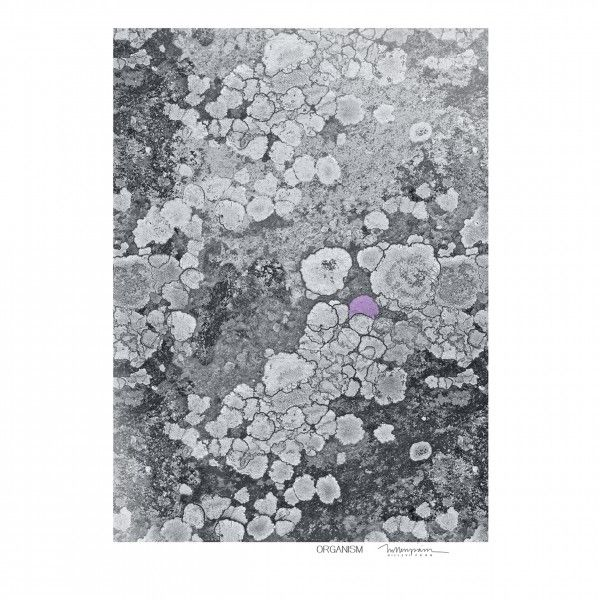Organism print design by Hillevi Pärn