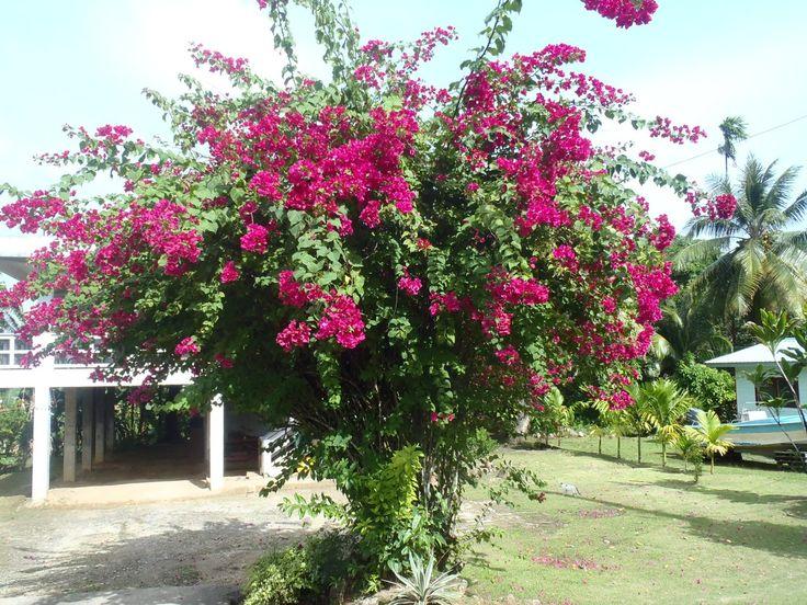Blühende Bäume Für Den Garten Von Unseren Redaktionsteams