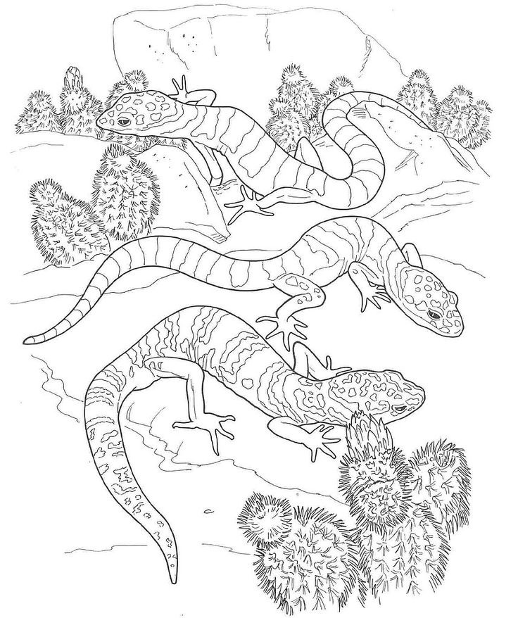 Desert Animals Coloring Pages Printable For Kids