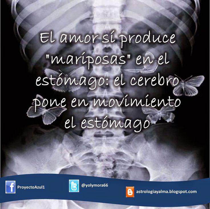 """El amor sí produce """"mariposas"""" en el estómago: el cerebro pone en movimiento el estómago"""