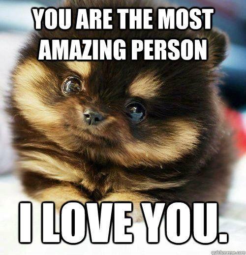 16 Super Sweet Memes On Animals Celebrating Valentine's Day - QuotesHumor.com