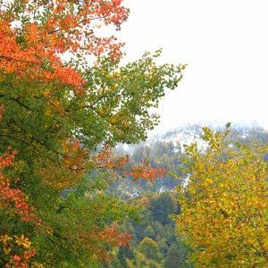 Charming autumn colors
