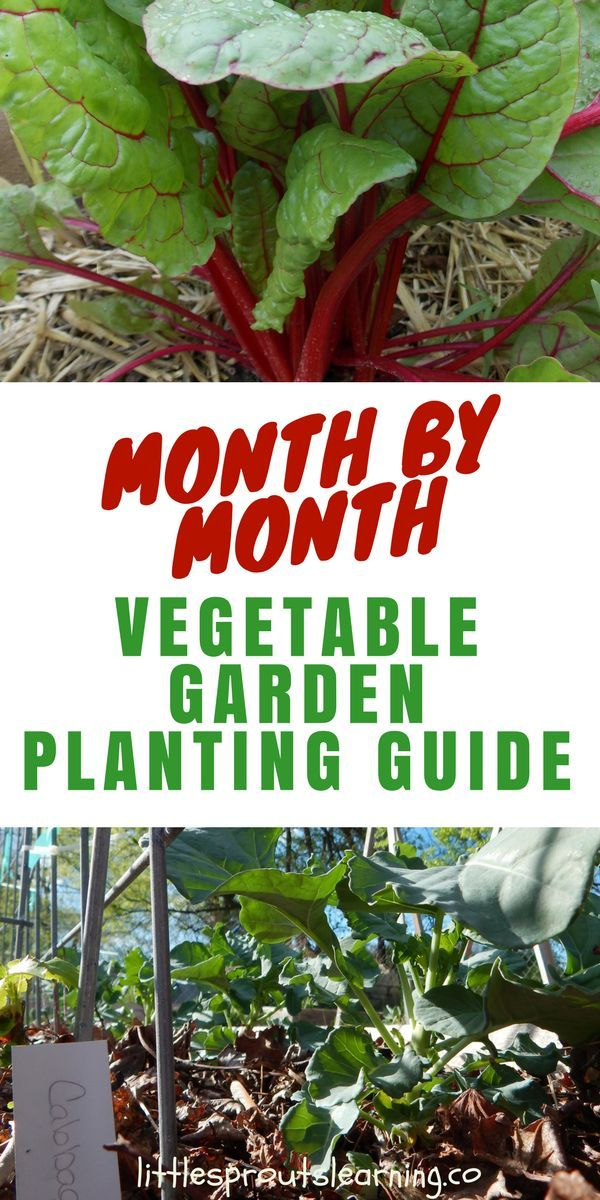 Month by Month Vegetable Garden Planting Guide Christina @ Little Sprouts Learning