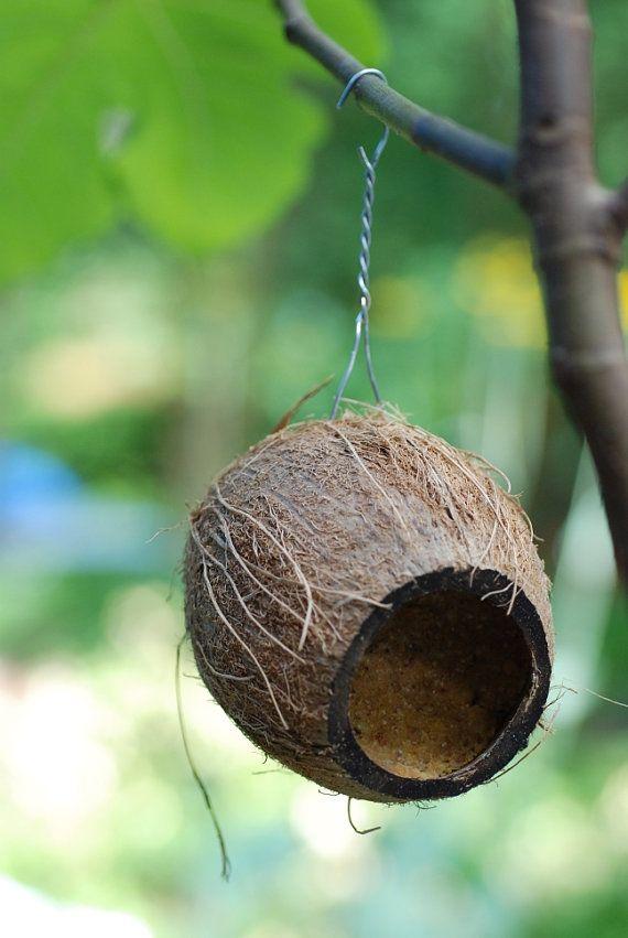 32 best eigen werk vreemde vogels van papier mache images for Whole coconut bird feeders