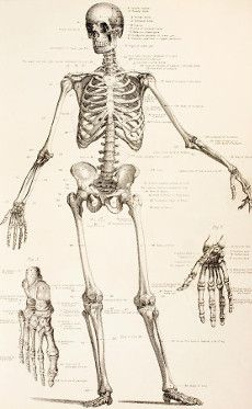 Forensic Anthropology and Osteology