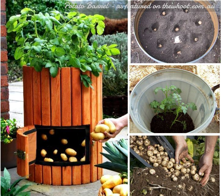 gardenfuzzgarden.com potato barrel | gardenfuzzgarden.com