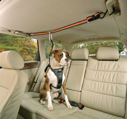 Kurgo Zip Line attached hand bars on both sides of rear seat.: © Kurgo Products cool idea!