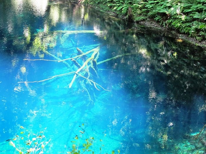 池の一部に太陽の光が当たって、コバルトブルーに輝いています。 鮮やかで思わず見とれてしまうほど美しい色です。