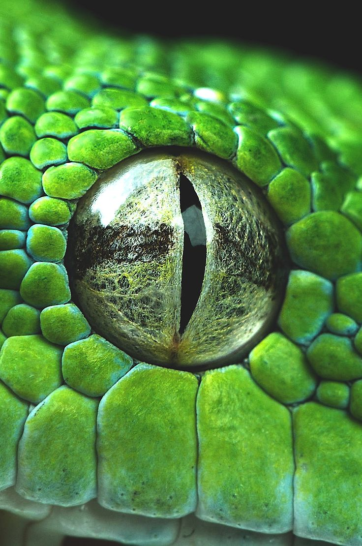 wavemotions:  Snake eye closeup by Henrik Vind