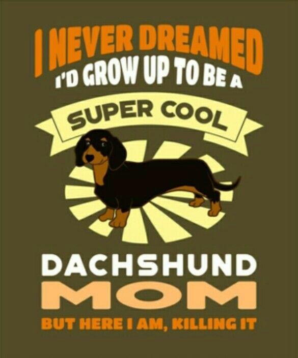 Dachshund Dachshund Puppy Miniature Dachshund Mom Dachshund