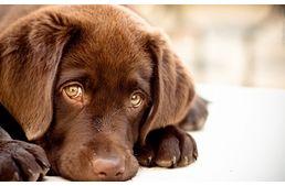 Mit tegyünk, ha fél a kutyánk?  #kutya #dog #félelem #labrador #nevelés #kutyabaráthelyek #kutyabarathelyek