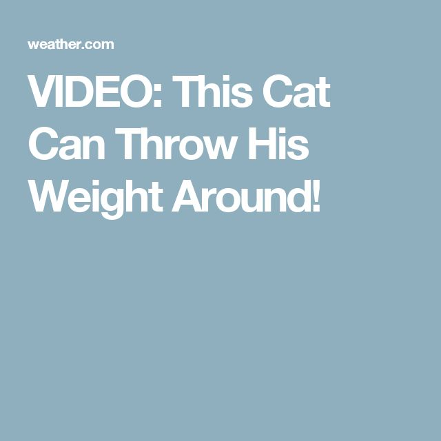 VIDEO: This Cat Can Throw His Weight Around!