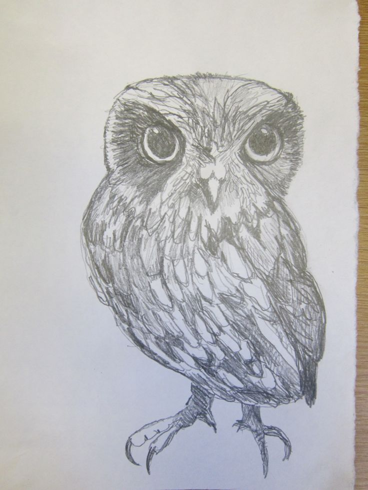 Owl inspired by a visit from Chris Sperring from the Hawk & Owl Trust