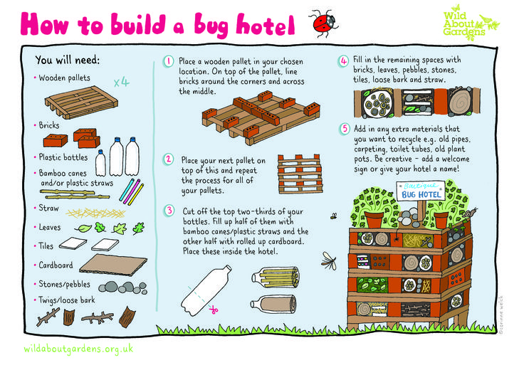 How-to-Build-a-Bug-Hotel-Activity-sheet 3,508×2,480 pixels