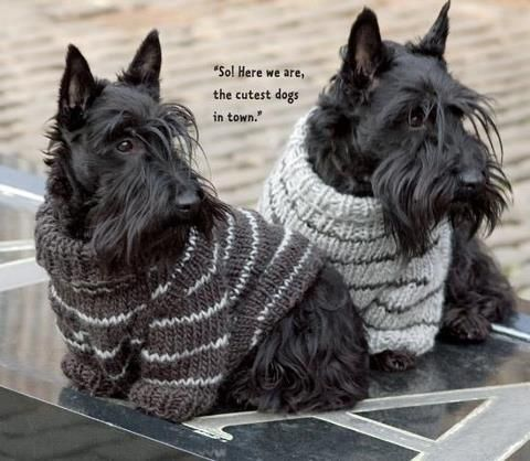 Coolest Dogs in Town