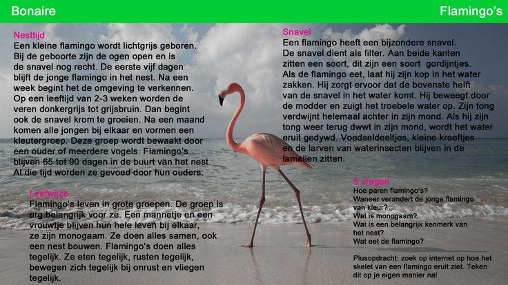 Kaart voor het zelfstandig werken Flamingo 2