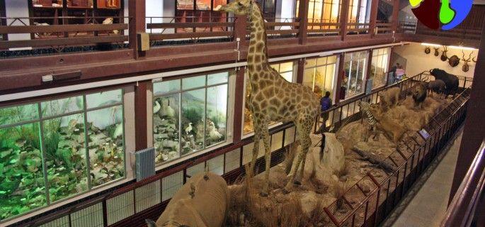 El Museo del Carmen y el Bioparc acuerdan ventajas en las entradas para ambos espacios
