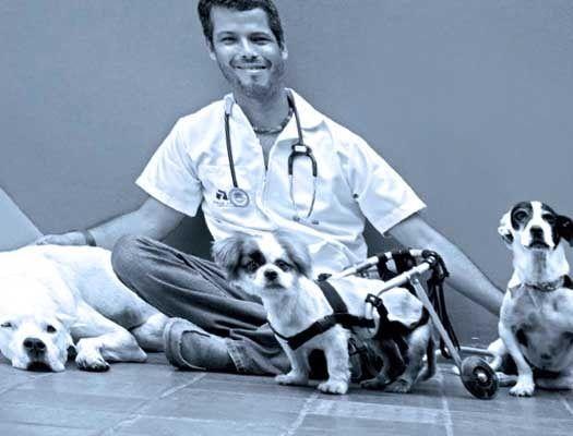 Curso de Auxiliar Veterinario - Los orígenes del perro y del gato. - La reproducción y el cachorro. El comportamiento. La higiene y vacunación. - La nutrición y la alimentación en el perro y el gato.  - Clínica veterinaria. Quirófano, instrumental y organización. - Anatomía y fisiología canina y felina. - Sujeción e inmovilización, toma de constantes vitales y cuidados básicos de perros y gatos. - Fluidoterapia. - Cura y desinfección de heridas. El trabajo en una clínica veterinaria.