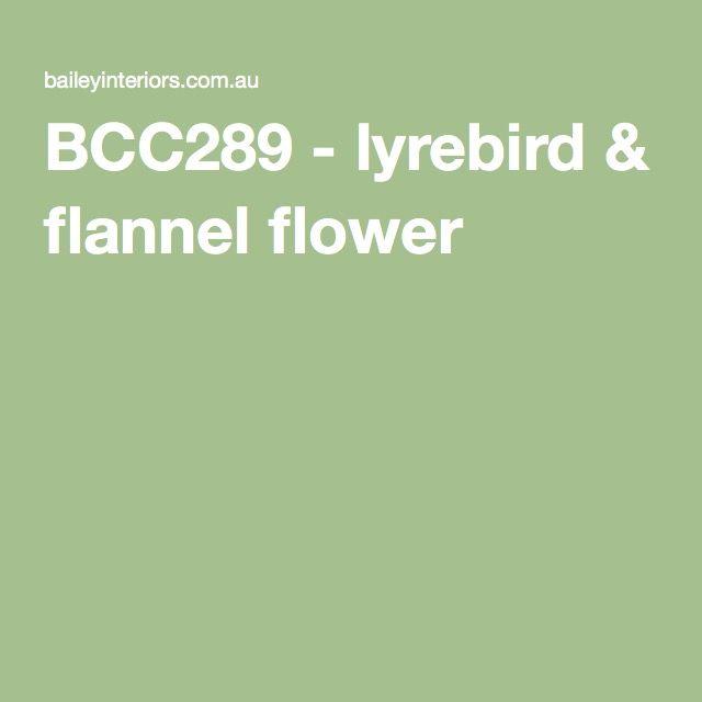 BCC289 - lyrebird & flannel flower