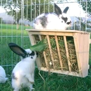 Here are some great new ways to give Bunny hay!      Pretty…  homemade #goat cheese, homemade #goat feed, homemade goat soap, homemade goat treats, homemade goat food, homemade goat milk, homemade goat how to make   #gift #home #decor #humor #posters #kids #parenting #men #outdoors #photography