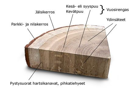 Puun rakenne - Puun rakenne - PuuProffa