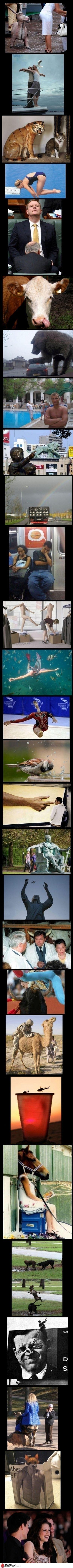 Perfect Timing Photos