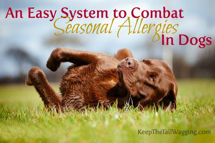 An Easy System to Combat Seasonal Allergies in Dogs