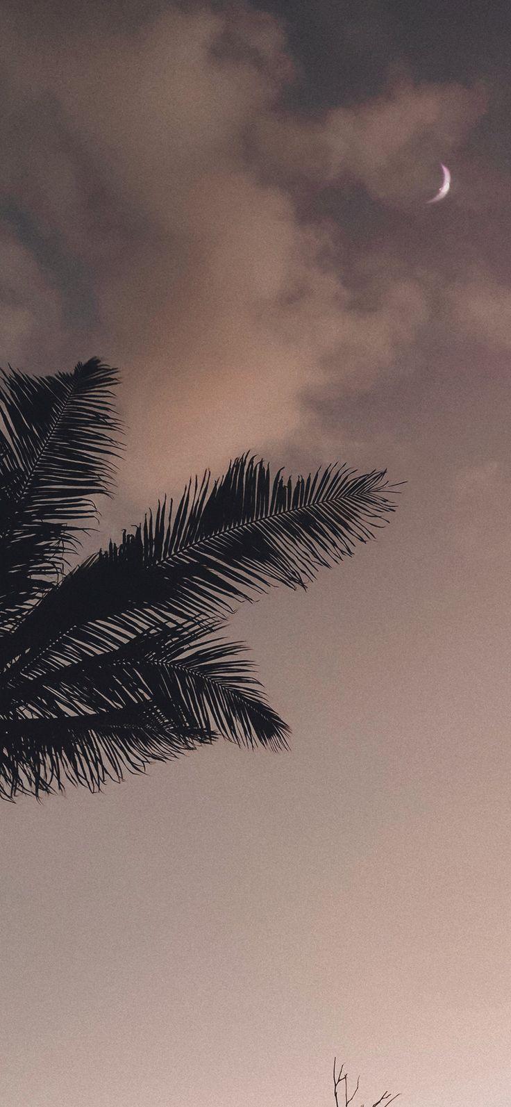 Palme unter abendlichem Himmel | Handy Hintergrundbild – #abendlichem #handy #Himmel #Hintergrundbild #Palme