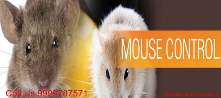 Call @ 9999787571. Uproot rats from your premises with excellent and high-performing rats control service in Delhi with Mourier pest control.