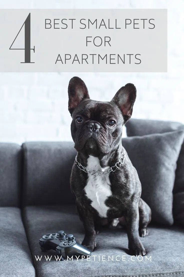 The Best Small Pets For Apartments Small Pet Carrier Tips In 2020 Best Small Pets Small Pet Carrier Small Pets