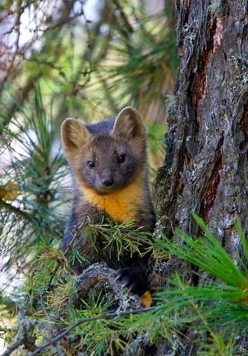 Mundo Animal e Natureza