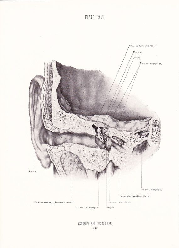 1926 Human Anatomy Print  External and Middle Ear  by Holcroft, $10.00
