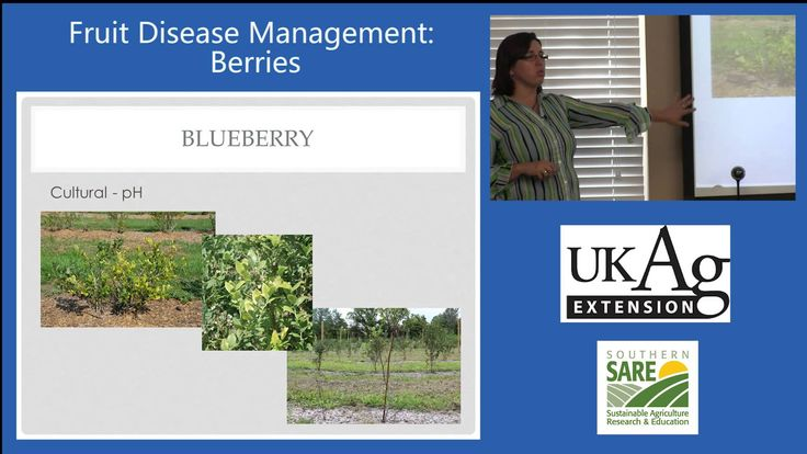 Nicole Ward Gauthier, Extension Plant Pathologist at the University of Kentucky explains berry disease management options for home gardening, including sustainable and organic management techniques.