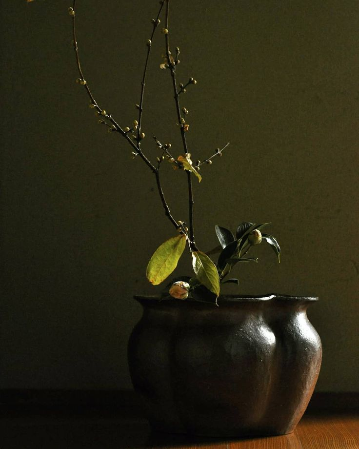 .  .  .  .  #pottery #bizen #landscape #tableware #bizenware #nature #natural #plants #flower #light #ikebana #art #atelier #craft #crafts #ceramic #atelier #ceramics  #vase #bowl #hitoshimorimoto #handmade #花器 #器 #うつわ #いけばな #なげいれ #備前焼 #森本仁 #曙椿 #蝋梅